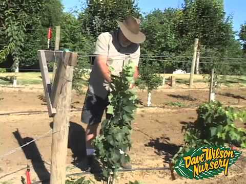 - Backyard Orchard Demo - First Pruning Part Two - YouTube