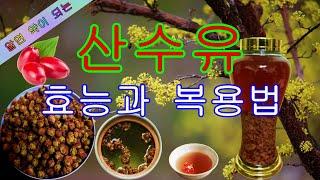 발기부전에 좋은 약초, 산수유 효능,  꽃차, 야생화,…