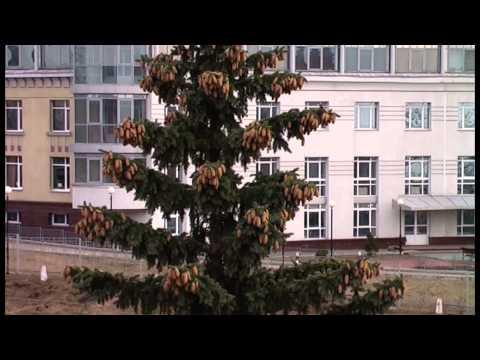 Нижний Новгород - прогулка по стене Нижегородского Кремля