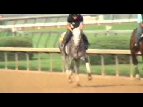Flashy Sunrise Gallops at Churchill Downs