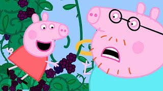 Peppa Pig Official Channel | Peppa Loves Blackberry Bush