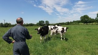 La traite des vaches racontée par Paul