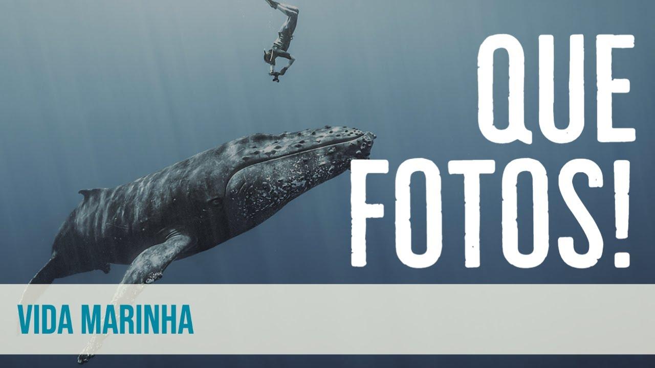 Ocean Photography Awards 2021 - As melhores fotos do oceano de 2021
