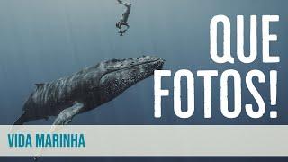 IMPRESSIONANTE! As melhores fotos subaquáticas do mundo - Ocean Photography Awards 2021