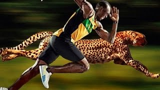 Usain Bolt Vs Cheetah