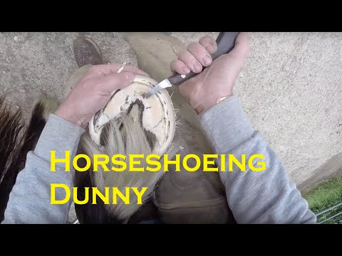 Horse shoeing Dunny