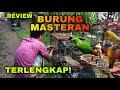 Burung Masteran Terbaik Untuk Burung Lomba Milik Dream Sengon  Mp3 - Mp4 Download