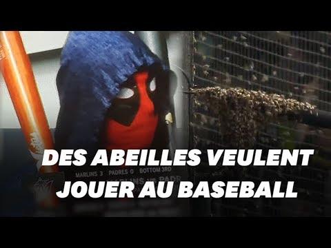 Un match de baseball interrompu par une invasion d'abeilles