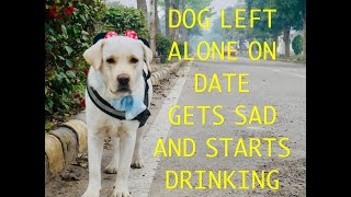 Dog Gets A Huge *SURPRISE* On A Date On Valentines Day(What happens next!)