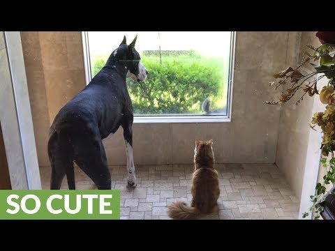 Dog and cat completely mesmerized by curious squirrel