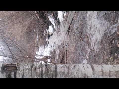 На Центральный парк в Йошкар-Оле напали крысы