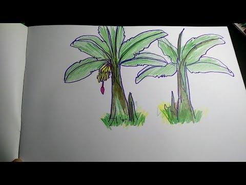 Cara Menggambar Pohon Pisang Youtube