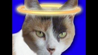 Creationist Cat, PaulsEgo, and JF! Craigslist Personals - Wacky Infomercials! DPP #157