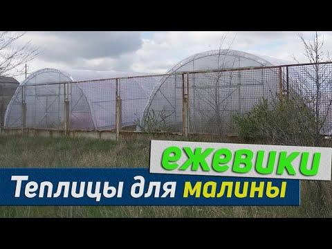видео: бизнес Теплицы для малины и ежевики