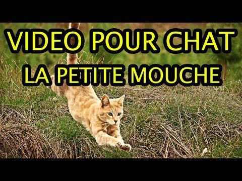 Mouche Pour Chat - Vidéo Pour Chat