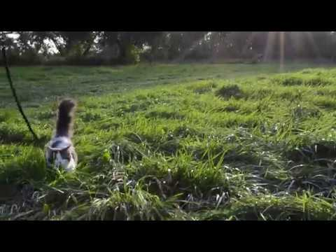 Cute Munchkin Kitten Adventure Cat Goes to the Apple Orchard