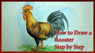 How to Draw a Rooster Step by Step