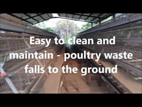Ultra Modern Poultry Farm for Sale in Nigeria