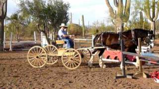 Buckboard Ride.mov