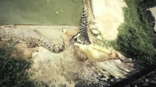 «Про животных и людей», Малайзия, крокодилы