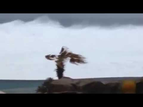 Uraganul Odile face pagube uriase