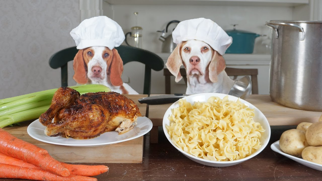 chef-dogs-cook-chicken-noodle-soup-funny-dogs-maymo-potpie
