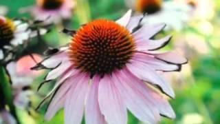 The Joy of Life - Original Song by Leah Espinoza