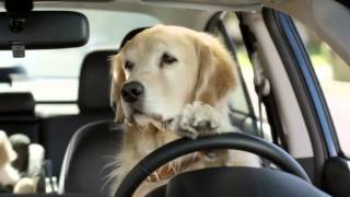Dog Tested  Dog Approved ®  Keep Your Eyes on the Road