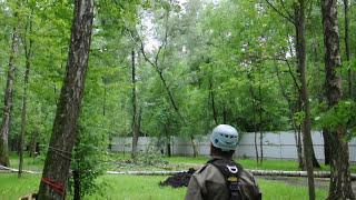 Валка (удаление) дерева с оттяжкой профессиональными арбористами.(Удаление дерева с оттяжкой осуществляется арбористами в ситуациях, когда есть достаточно места для валки..., 2015-07-03T15:49:23.000Z)