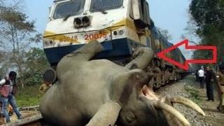 ट्रेन से टकराया हाथी, फिर जो हुआ देखकर आपके रोंगटे खड़े हो जायेंगे