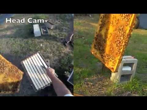 Download Youtube: FatBeeMan Hive Inspection and Splitting