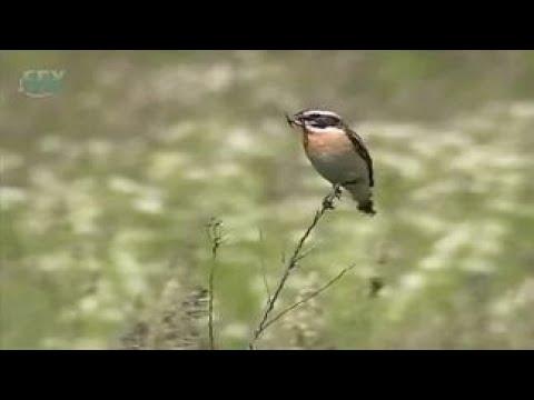 Птицы лугов