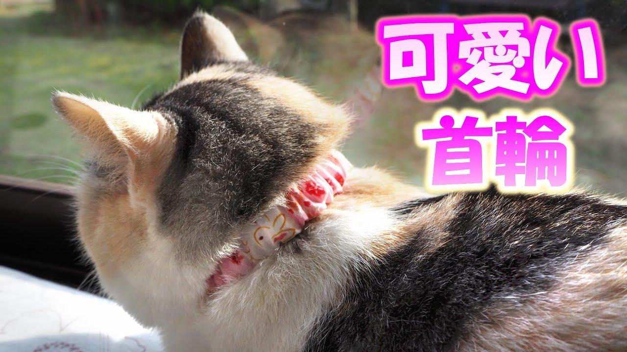 very cute cat collar youtube very cute cat collar voltagebd Gallery