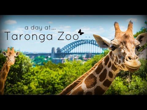 Taronga Zoo, Sydney Australia