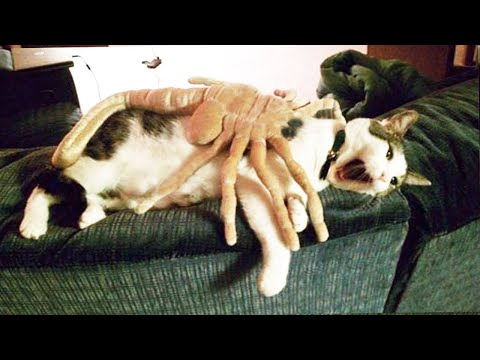 Funniest Animals – Best Of The 2020 Funny Animal Videos #4