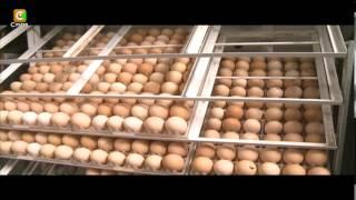 Smart Farm: kienyeji chicken hatchery business
