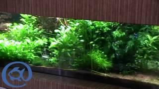 Голландский аквариум 1000 литров