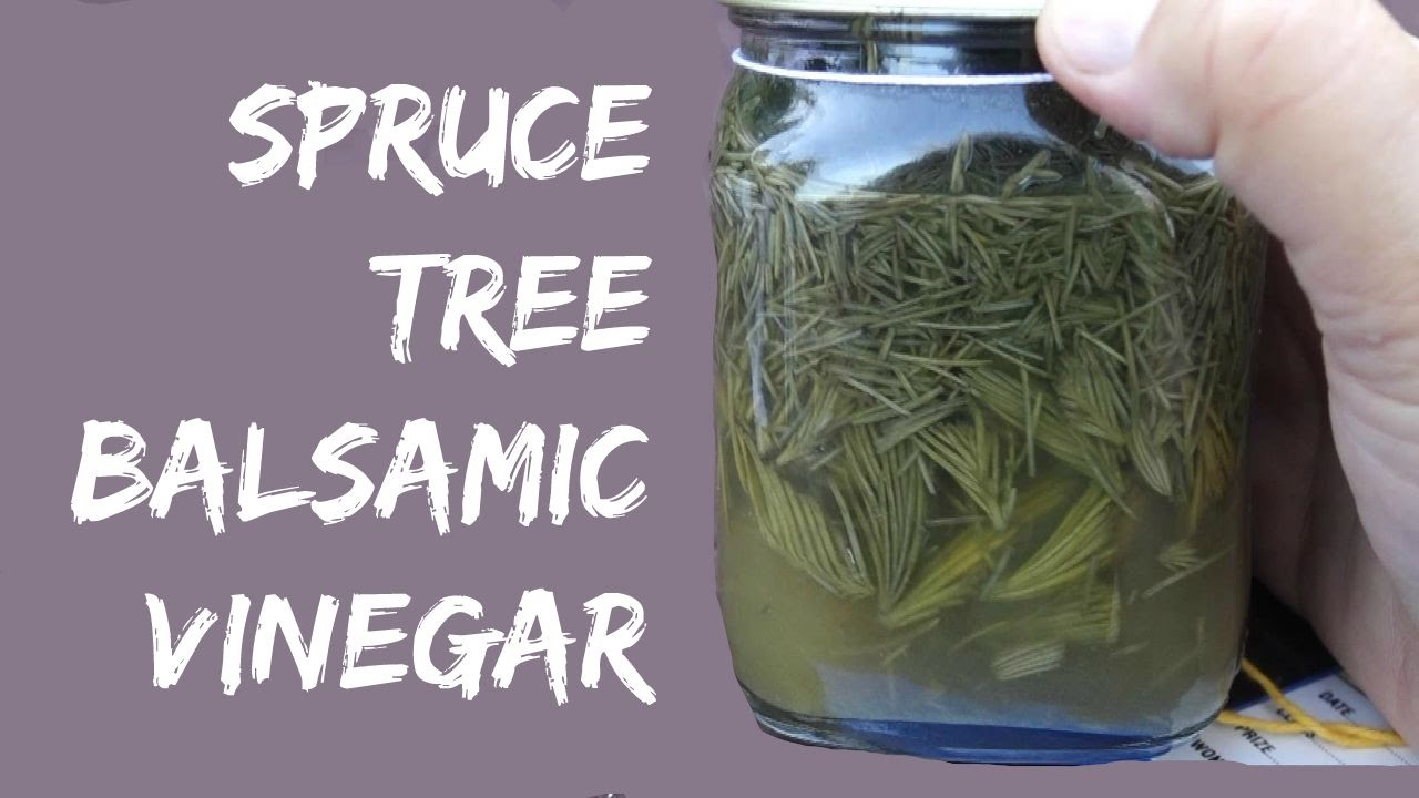 How to make Balsamic Vinegar from Spruce Trees - YouTube