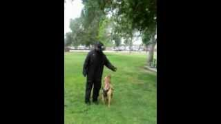 Dog Demo With Trainer Aj