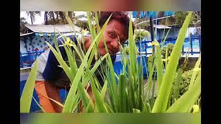 Gambar cover Fakhrul Razi - Ya Iyalah (Lirik)