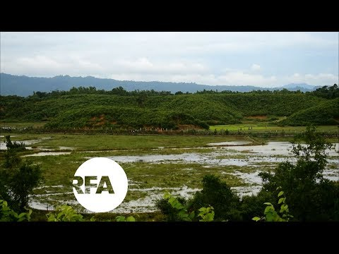Myanmar Security Forces Fire on Fleeing Rohingyas | Radio Free Asia (RFA)