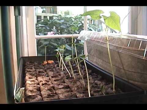 Mary's vegetable garden