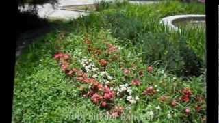tıbbi bitkiler bahçesi