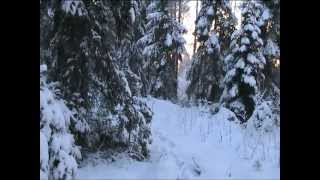Asmr Relieving Stress: Showing My Winter Forest Wonderland - Whisper