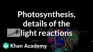 Photosynthesis:  Light Reactions and Photophosphorylation