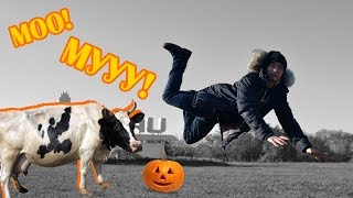 VLOG: Рассвет за городом + Общительная КОРОВА | Speaking COW by #FTWRabbit