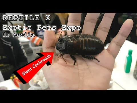 TOTALLY GEEKING OUT at a Reptile & Exotic Pets Expo in Manila (Jan 22, 2017) | Vlog #5