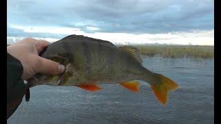 Рыбалка класс и рабочая блесна на крупных окуней
