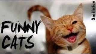 FUNNY Cats  Подборка смешная  Видеоприколы кошки