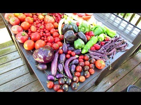 Vegetable Garden Tour & Tips 7/29/2018: Priorties, A Birdbath & Tomato Sauce Recipe